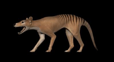 3D-Modell Beutelwolf