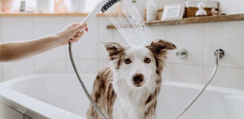 Hund unter der Dusche