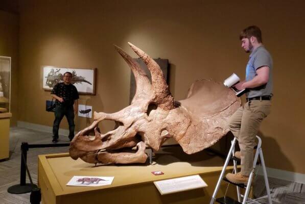 Dinosaurierschädel mit 3D-Scanner