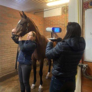 Pferd wird mit 3D-Scanner erfasst