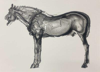 Partielle Digitalisierung eines Pferdes