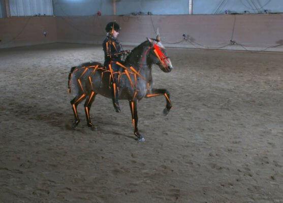 Digitale Animation des Pferdes auf Grundlage der 3D-gescannten Bilder