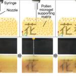 Pollenbasierter 3D-Druck der Forscher